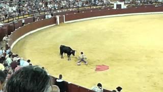 Torero valiente vacila al toro