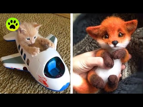 Animals Are SOO Cute! Cute baby animals Videos Compilation cutest moments of the animals #10
