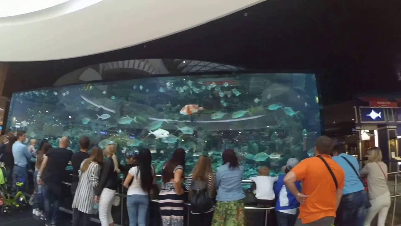 SL Выставка аквариумных рыбок, Киев - YouTube