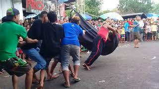 Banteng Bantengan Ngamuk Ke Penonton|kaki Kebal Dicambuk