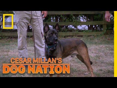 Finding a Dog's Balance | Cesar Millan's Dog Nation