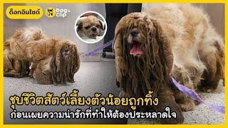 ชุบชีวิตสัตว์เลี้ยงตัวน้อยถูกทิ้ง ก่อนเผยความน่ารักที่ทำให้ต้องประหลาดใจ   Dog's Clip