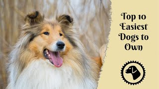 Top 10 Easiest Low Maintenance Dogs to Own - Tips for Buying a New Dog