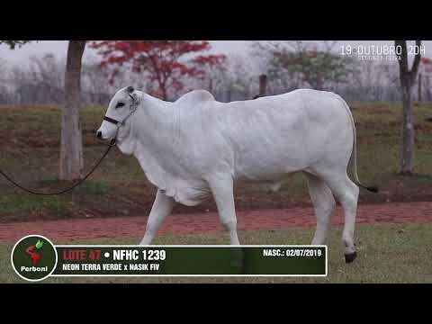 LOTE 47   NFHC 1239