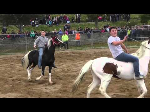 Hot To Trot - Ballinasloe Horse Fair 2015