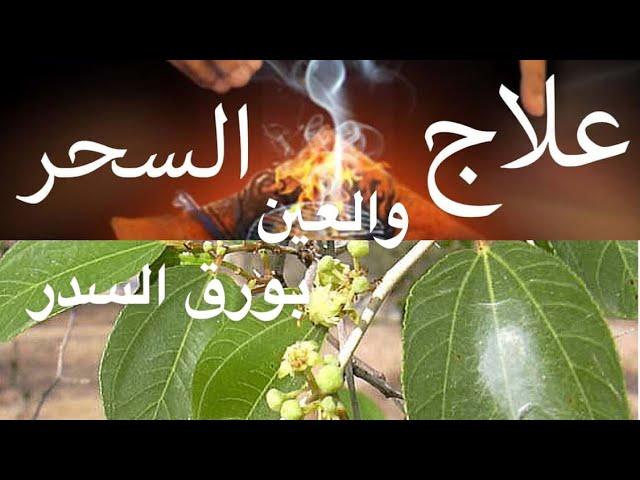 شجرة السدر فوائد وعلاج من السحر والعين والحسد Youtube