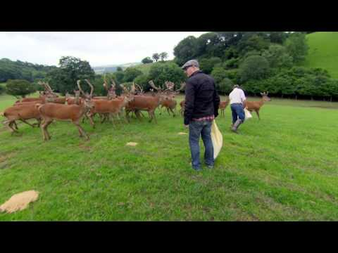 Farming Red Deer - Ade In Britain