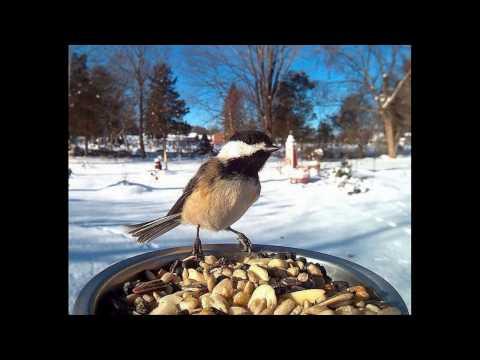Птицы. Виды птиц, разновидность птиц.