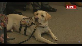 Sully, President George HW Bush's service dog, returns to LI