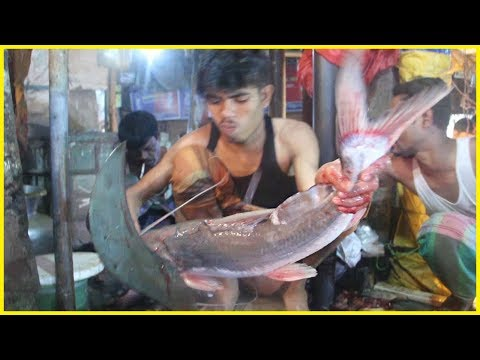 How to Cut a Catfish In Fish Market   Freshwater River Long-whiskered Catfish Cutting By Fish Cutter