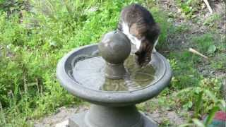 Cat, Then Birds On Fountain - Folly Beach, April 16, 2012 (9-10am)
