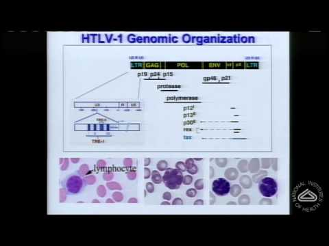 Nuclear damage and miscounted chromosomes: Human T cell leukemia virus transformation of cells
