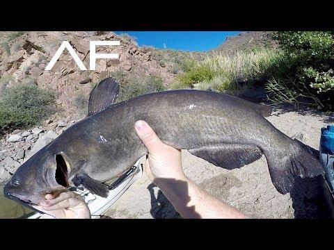 hook up az fishing
