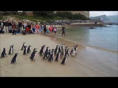 African Penguin Day