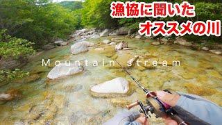 漁協に聞いた 最強オススメの川に行ってきた【渓流釣り】