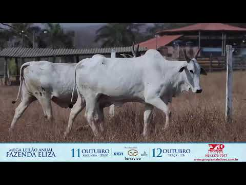 LOTE 189