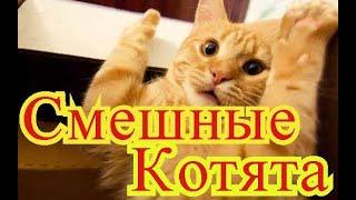 Смешные котята. Позитив. Создай себе хорошее настроение