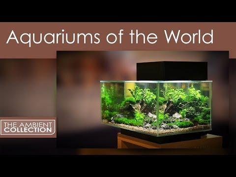 Aquarium DVD - Aquariums Of The World With 12 Fish Tanks In HD