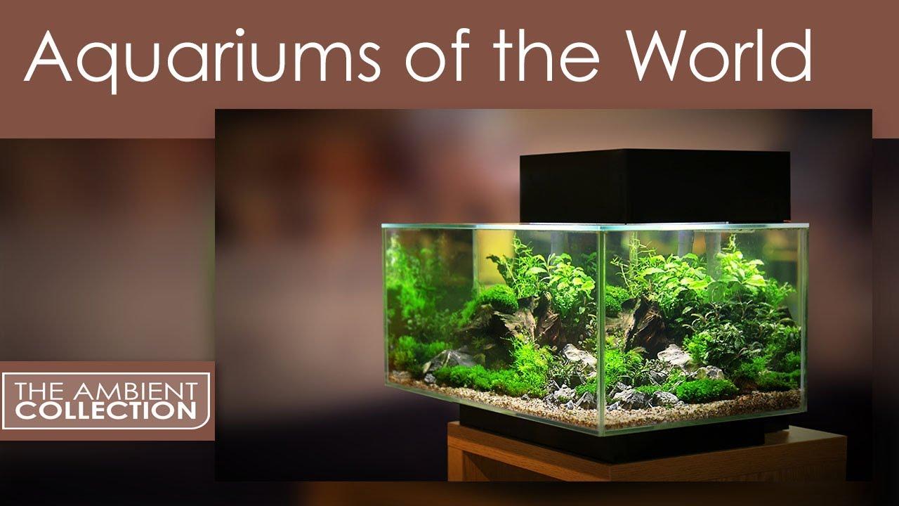 Aquarium DVD - Aquariums Of The World With 12 Fish Tanks In HD - YouTube