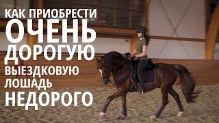Как приобрести очень дорогую выездковую лошадь НЕДОРОГО