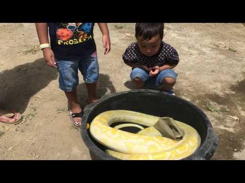 nemu-ular-sanca-besar-di-tempat-wisata-jendela-alam-bandung
