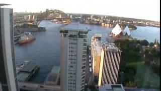 Australia 2001: Utricularia gibba in Sydney
