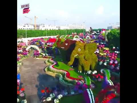 The Emirates plane ✈ A380 Blossoms at Dubai Miracle Garden 🌸 🌸 🌸