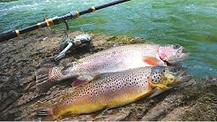 Catch Your Own Bait Trout Fishing Challenge!!