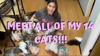 VLOG #9: SHOWING YOU ALL OF MY CATS!