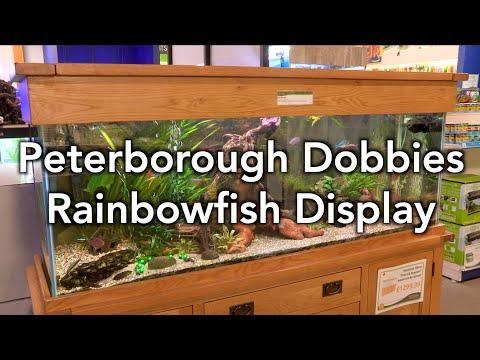 Tank Of The Month - Maidenhead Aquatics @ Peterborough Dobbies Rainbowfish Display