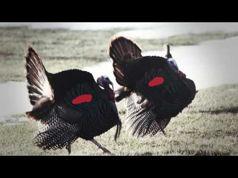 Moment Of Truth: Determining Turkey Shot Placement