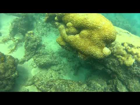 Lauderdale by the Sea Beach Dive (Full Dive Video) 720p HD 3/10/12