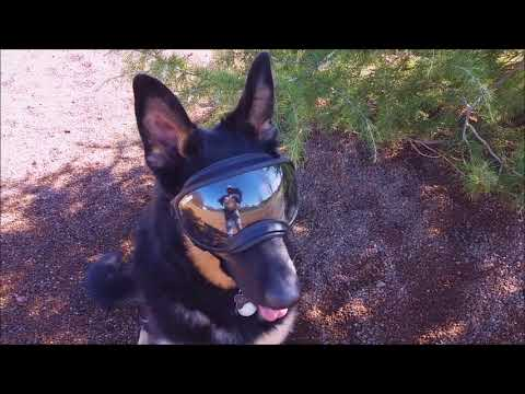 Bella at the Doggy Park in Rex Specs doggles