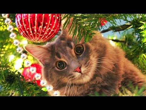 Cats Love Christmas Trees Compilation NEW