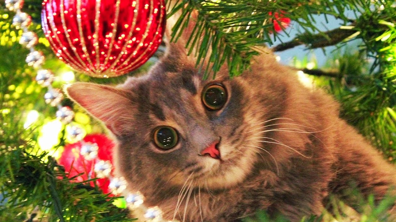 Keep Cat Out Of Christmas Tree
