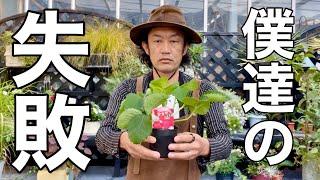 イチゴ栽培に失敗した方へ  【カーメン君】【園芸】【ガーデニング】【初心者】
