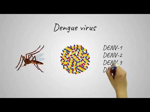 New Dengue Virus Vaccine Shows Promise