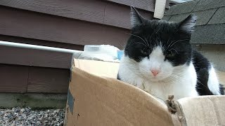 Homeless Cat asking for help 🔴