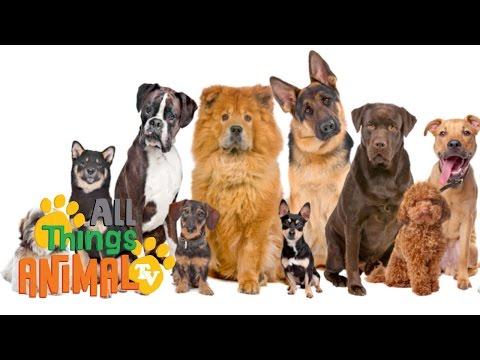 DOGS: Animals for children. Kids videos. Kindergarten | Preschool learning