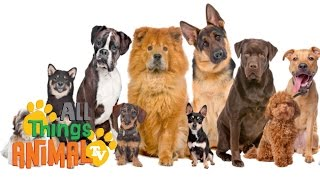 Dogs: Animals For Children. Kids Videos. Kindergarten | Preschool Learning