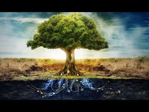 Interpretação - Dia da Árvore - A Carta 5 na Mesa Real
