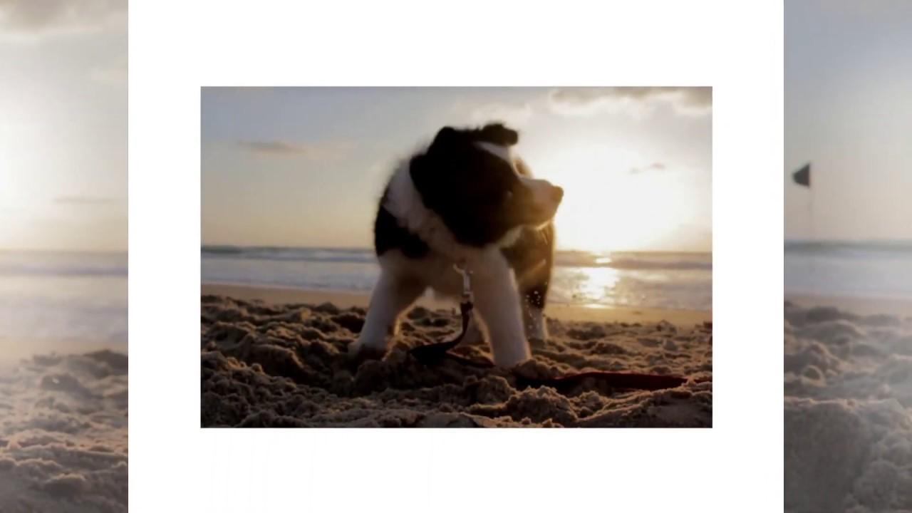 Syn Cole - Gizmo | Beaches