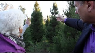 Christmas Tree Farm - Cut Your Own Christmas Tree - Modesto, California