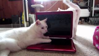 Talking Cat Consultants