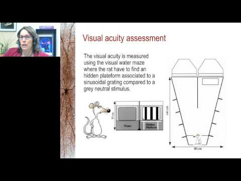 Elvire Vaucher - Cholinergic modulation of visual perception in rodents