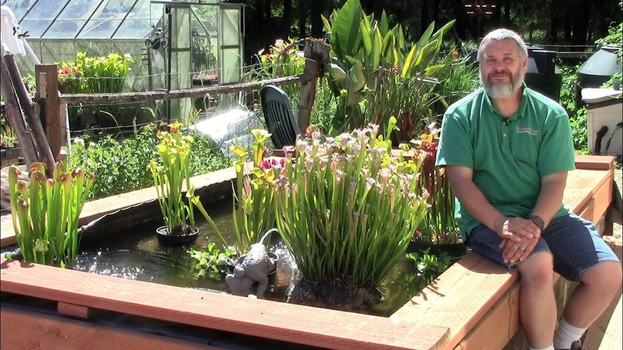 carnivorous plant rock garden youtube. Black Bedroom Furniture Sets. Home Design Ideas