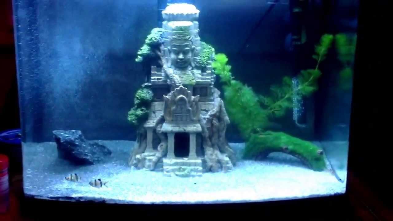 Superfish aquarium fish tank aqua 60 - Superfish 60 Panoramic Aquarium With Tiger Barbs
