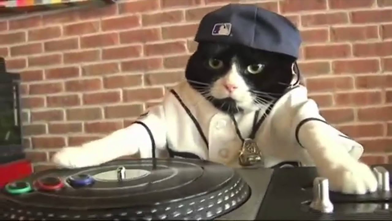 Image result for dj kitty