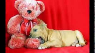 Chunky Monkey - Hawaii Animal Rescue Fondation