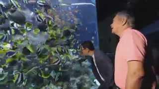 ลีลามี ตะลุย S.E.A Aquarium & Universal Studios สิงคโปร์ 2/3 (3 ก.ค.58)